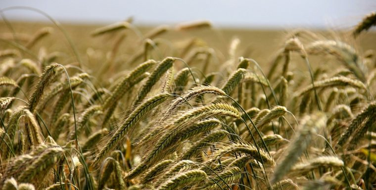 Устройство для прогнозирования урожайности заинтересовало многих фермеров